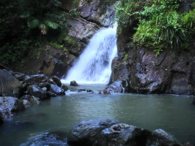 rainforest-elyunque-canario