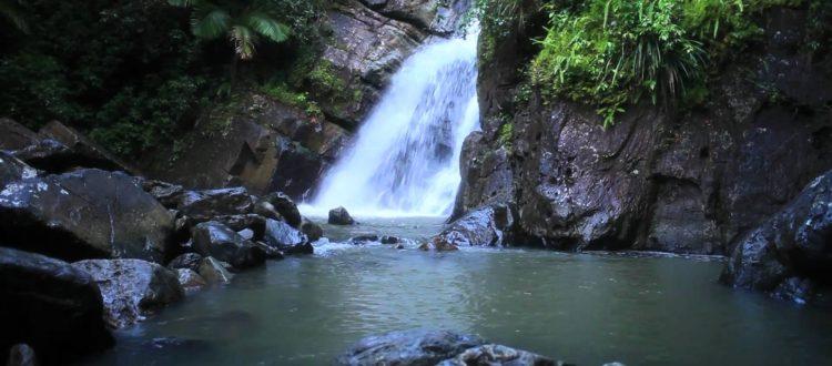 rainforest-elyunque-canario